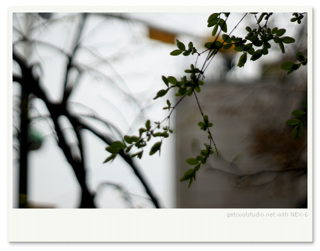 DSC08232-001.jpg